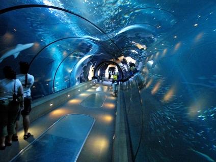 oceanarium-tunnel-walk