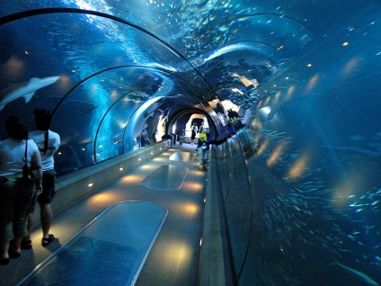 oceanarium-tunnel-walk