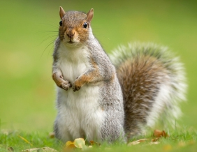 new-squirrel-cover