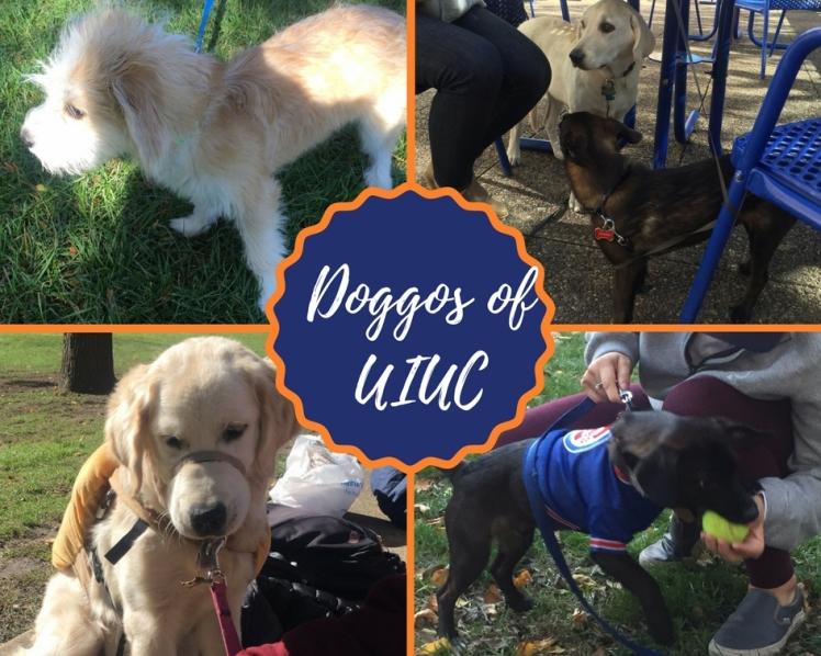 Doggos of UIUC - Featured Image