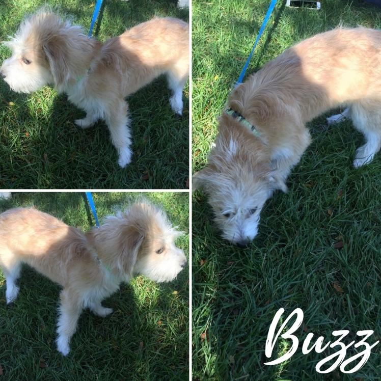 UIUC Doggos - Buzz