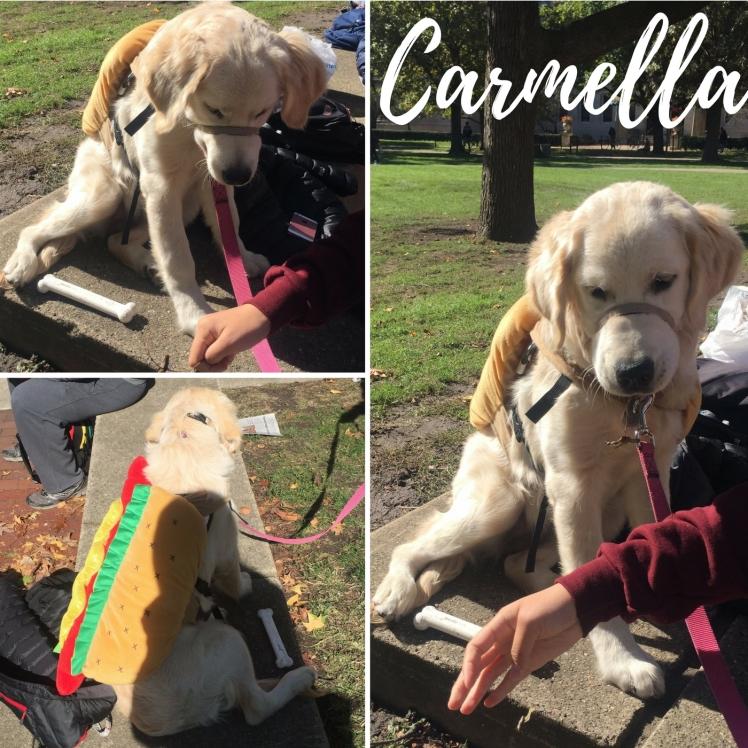 UIUC Doggos - Carmella