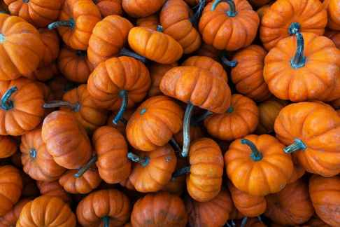 Non-Feature-pumpkin-spice-product-taste-test